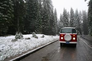 Vanessa, Sequoia National Park